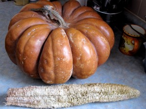 The last of last year's squash, and a loofah, or luffa squash.