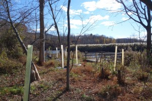 Scenic Hudson is no doubt worried that this project will take a bite out of its native plantings project on the creek shoreline.